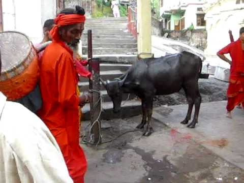 Animals are Routinely Sacrificed at The Kamakhya Temple
